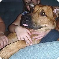 Adopt A Pet :: Braxton - Hamilton, ON