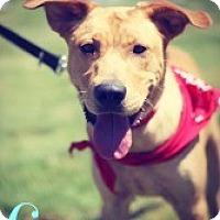 Adopt A Pet :: Goose - Justin, TX