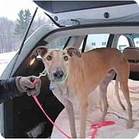 Adopt A Pet :: Dan (Crt Dan) - Chagrin Falls, OH