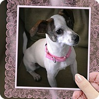 Adopt A Pet :: LILIANA (Lilly) - Higley, AZ