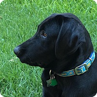 Adopt A Pet :: Proby - Coppell, TX
