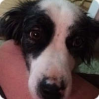 Adopt A Pet :: Buster - Oliver Springs, TN