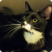 Adopt A Pet :: Oreo - Maryville, TN