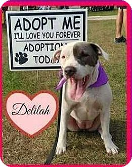 American Bulldog Mix Dog for adoption in Riverview, Florida - Delilah