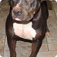 Adopt A Pet :: Shirley the Mama Dog - Midlothian, VA
