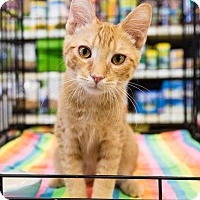 Adopt A Pet :: Garrett - Gilbert, AZ