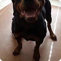 Adopt A Pet :: Sasha - Sayville, NY