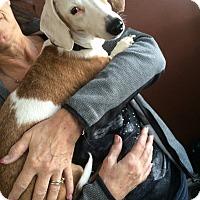 Adopt A Pet :: Amie - Duchess, AB
