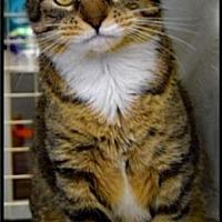 Adopt A Pet :: Kiki - Ogden, UT