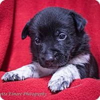 Adopt A Pet :: Freckles - Daleville, AL
