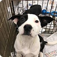 Adopt A Pet :: Sparky - Fresno, CA