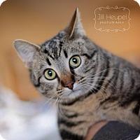 Adopt A Pet :: Bubba - Edwardsville, IL
