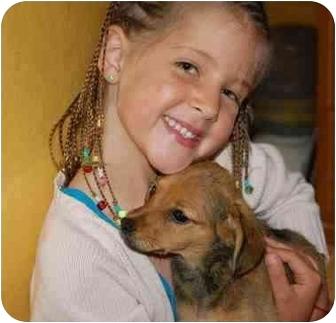 Dachshund/Shiba Inu Mix Puppy for adoption in Chula Vista, California - Charlie