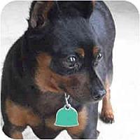 Adopt A Pet :: JUNIOR - Springvale, ME