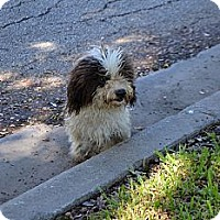 Adopt A Pet :: Pierre - Houston, TX
