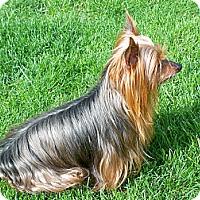 Adopt A Pet :: Ally - Lorain, OH