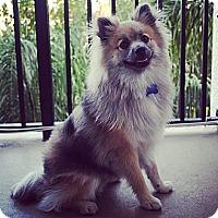 Adopt A Pet :: REGGIE - Hollywood, FL