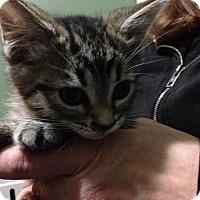 Adopt A Pet :: Oskar - Hamilton, ON