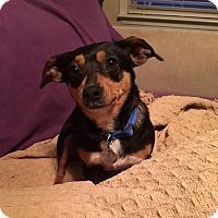 Adopt A Pet :: Beenie - Homewood, AL