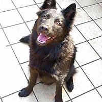 Adopt A Pet :: Theodore - menlo park, CA