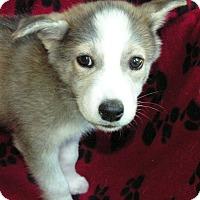 Adopt A Pet :: Hayden - Normandy, TN
