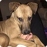 Adopt A Pet :: Zeus - Knoxville, TN