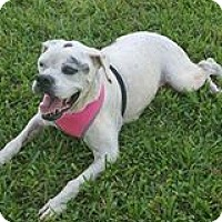 Adopt A Pet :: Evergreen - Homestead, FL