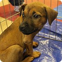 Adopt A Pet :: Abby - Philadelphia, PA