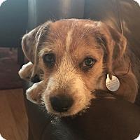 Adopt A Pet :: Nova - PORTLAND, ME