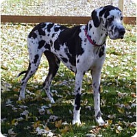 Adopt A Pet :: Lilybelle - Pearl River, NY