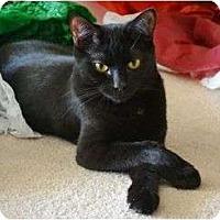 Adopt A Pet :: Ragetti - Port Republic, MD