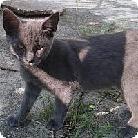 Adopt A Pet :: Dean - Brooklyn, NY