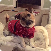Adopt A Pet :: Twister in Houston - Houston, TX