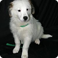 Adopt A Pet :: Ellie - Lufkin, TX