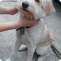 Adopt A Pet :: Taffy - Humble, TX