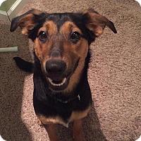 Adopt A Pet :: Fancy - waterbury, CT