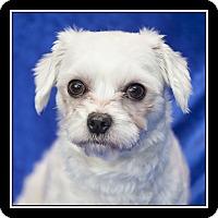 Adopt A Pet :: Gina - San Diego, CA