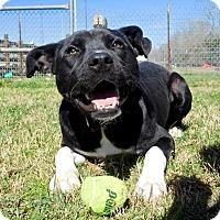 Adopt A Pet :: Thor - St. Francisville, LA
