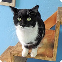 Adopt A Pet :: Suzie - Chattanooga, TN