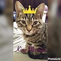 Adopt A Pet :: KING MAXIMA - Houston, TX