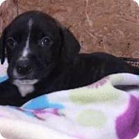 Adopt A Pet :: Jackson - Dana Point, CA