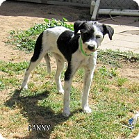 Adopt A Pet :: Fanny - Lindsay, CA