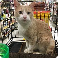 Adopt A Pet :: Travis - Winchester, CA
