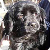 Adopt A Pet :: Penny - Harrison, AR