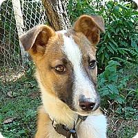 Adopt A Pet :: Dwight - Redmond, WA