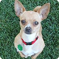 Adopt A Pet :: Stephanie - La Habra Heights, CA