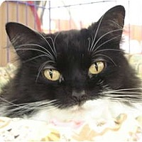 Adopt A Pet :: Sunnie - Chesapeake, VA