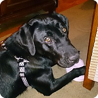Adopt A Pet :: Gracie-Lou - Bardonia, NY