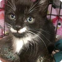 Adopt A Pet :: Marsh - East Brunswick, NJ