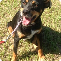 Adopt A Pet :: Ryder - Northport, AL